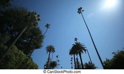 пальма, дерево, водить машину