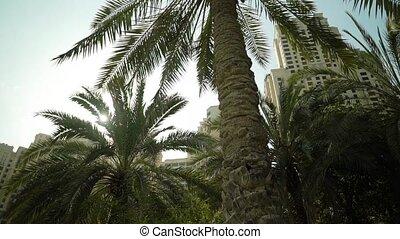 пальма, дерево, солнце