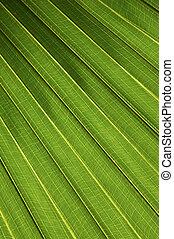 пальма, лист