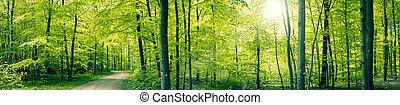 панорама, зеленый, лес, пейзаж