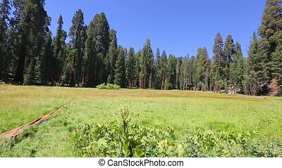 панорама, парк, национальный, секвойя