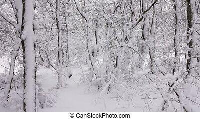 панорама, covered, лес, ветви, снег, зима