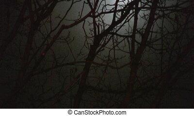 панорамирование, ветви, луна