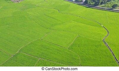 панорамный, поля, солнечный лучик, огромный, под, рис, посмотреть