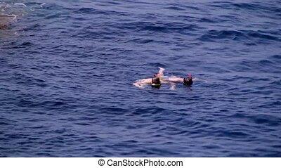 пара, молодой, divers