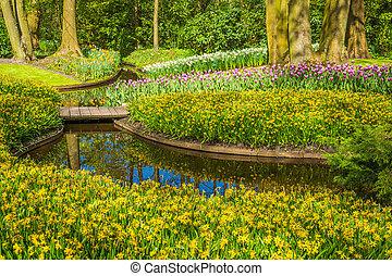 парк, задний план, весна, time.