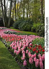 парк, красочный, весна