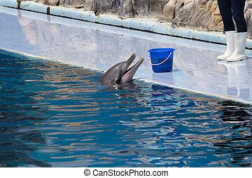 парк, показать, дельфин