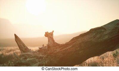пень, хобот, дерево, закат солнца, холм, старый
