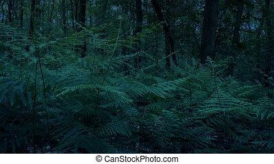перемещение, вечер, выстрел, ferns, лесистая местность