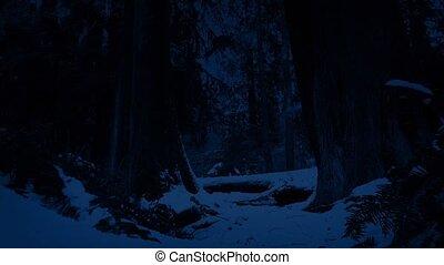 перемещение, ночь, через, лес, снежно
