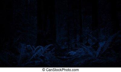 перемещение, через, лес, ночь