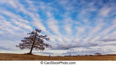 перемещение, clouds, дерево, лиственница, над, поле