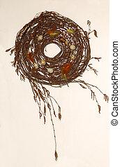 перепел, гнездо, 1