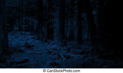 пересечение, дорожка, лесистая местность, ночь