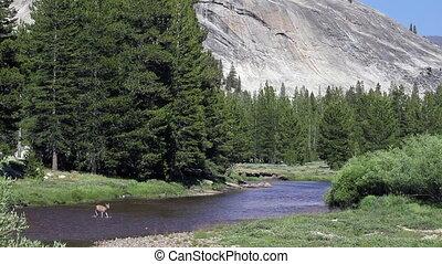 пересечение, монтаж, река, олень