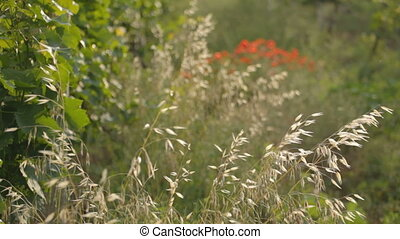 перо, 3, 1, полевой цветок, сухой, редактировать