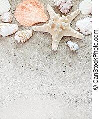 песок, граница, море, вертикальный, ракушки