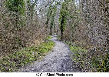 пешеходная дорожка, лес