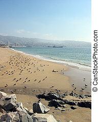 пляж, вальпараисо, чили