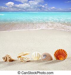 пляж, лето, отпуск, задний план, оболочка, жемчужный,...