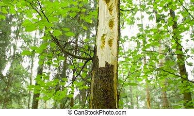 поврежденный, дерево, хобот