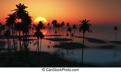 поднимающийся, солнце, and, palms, в, океан