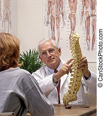 позвоночник, костоправ, модель, пациент