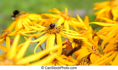 поздно, лето, butterflies, цветы, желтый