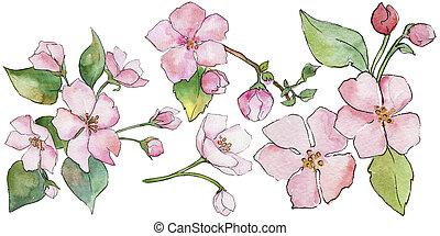 полевой цветок, весна, isolated., цветочный, blossoms., ботанический, flower., вишня, розовый, дикий, лист