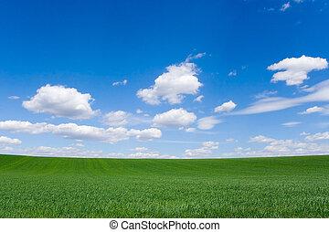 поле, весна