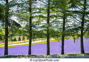 поле, за, цветок, trees, красочный