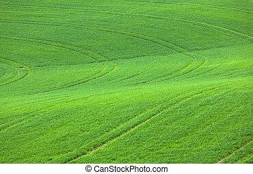 поле, зеленый, метки