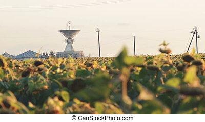 поле, небо, задний план, созревший, sunflowerson