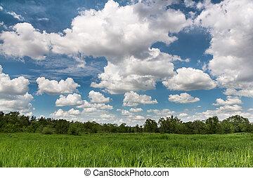 поле, пейзаж, зеленый, cloudscape