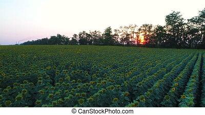 поле, растение, трутень, антенна