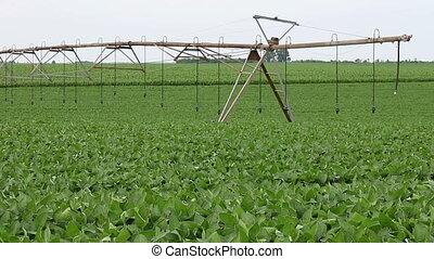 поле, сельское хозяйство, соя