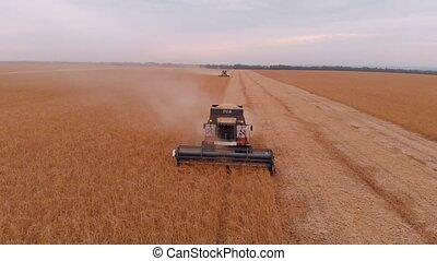 поле, скомбинировать, соя, harvesting