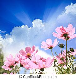 поле, цветы