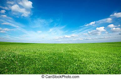 поле, of, зеленый, свежий, трава, под, синий, небо