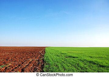 поле, plowed, задний план, зеленый