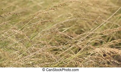 поле, straws