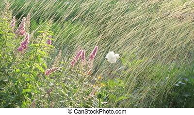 полив, сад, цветы