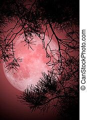 полный, луна, ночь