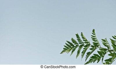 полный, филиал, растение, зеленый, синий, swings, slowly, hd...