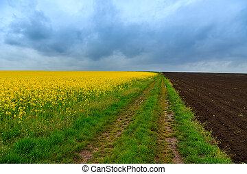 поля, дорога, канолы, грязь