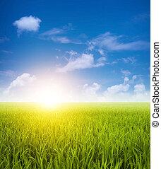 поля, зеленый, пейзаж, пэдди