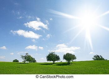 поля, blossoming, день