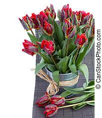 попугай, весна, цветы, тюльпан