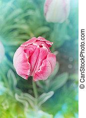 попугай, тюльпан, розовый, сад, красивая, цветы